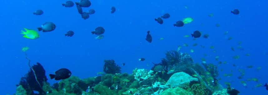 Kleine Fische unter Wasser